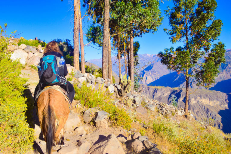 riding a mule out of the colca canyon on day two