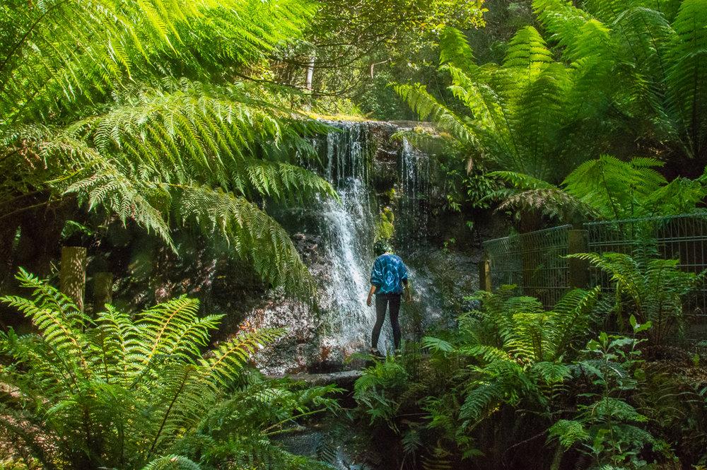 green rainforest and waterfall in Tasmania