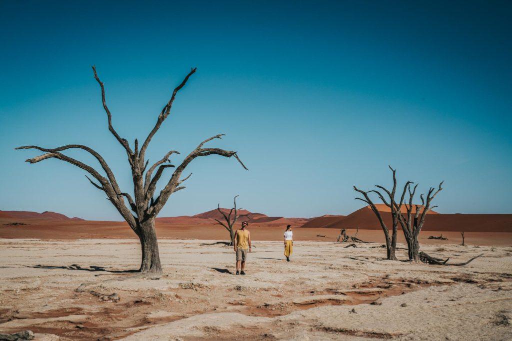 dead trees in red mud desert
