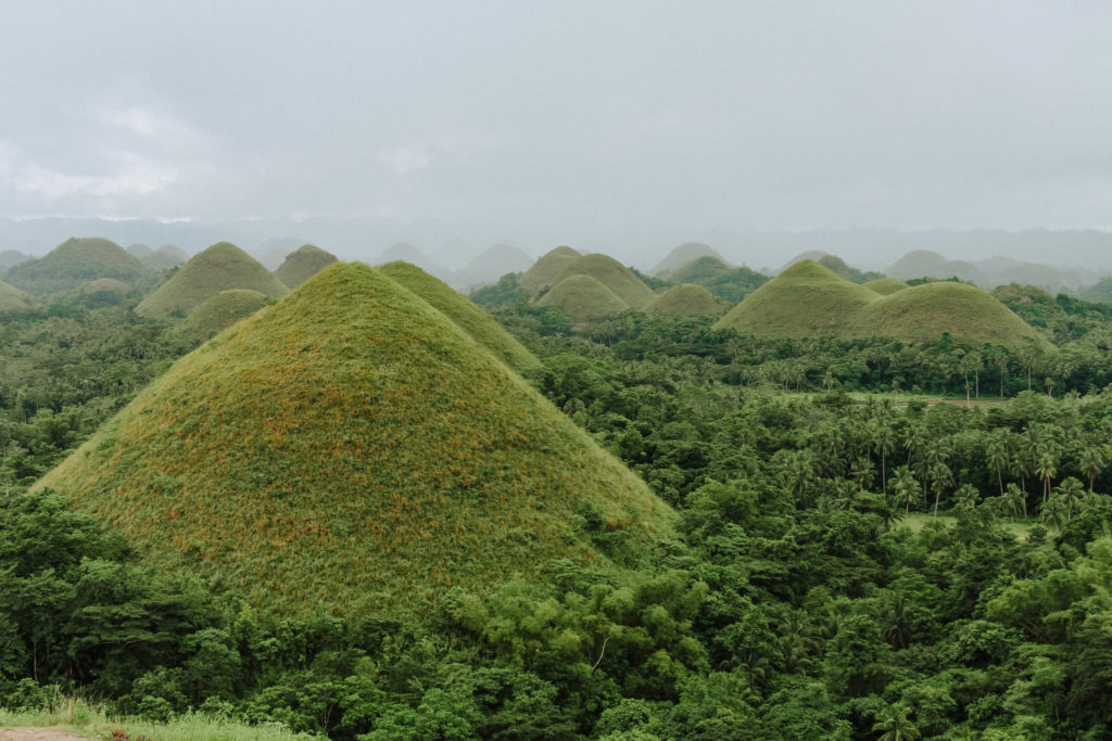green mounds sticking out from jungle