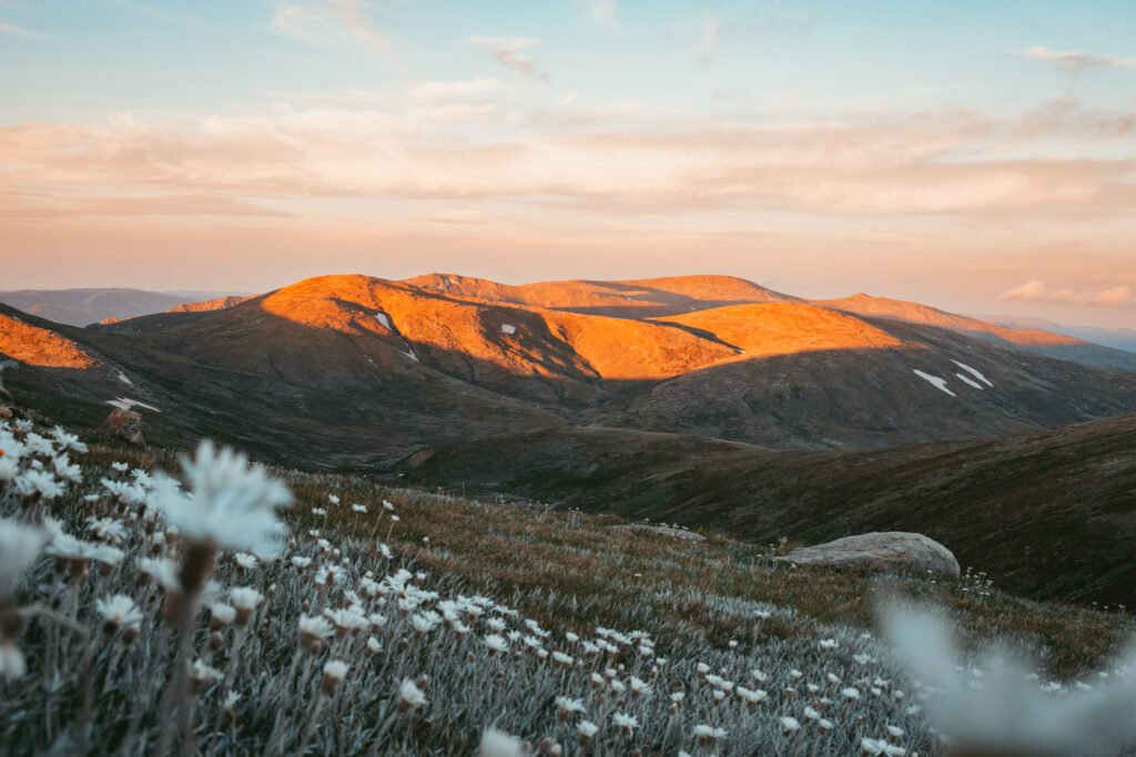 highest mountain in australia with white flowers