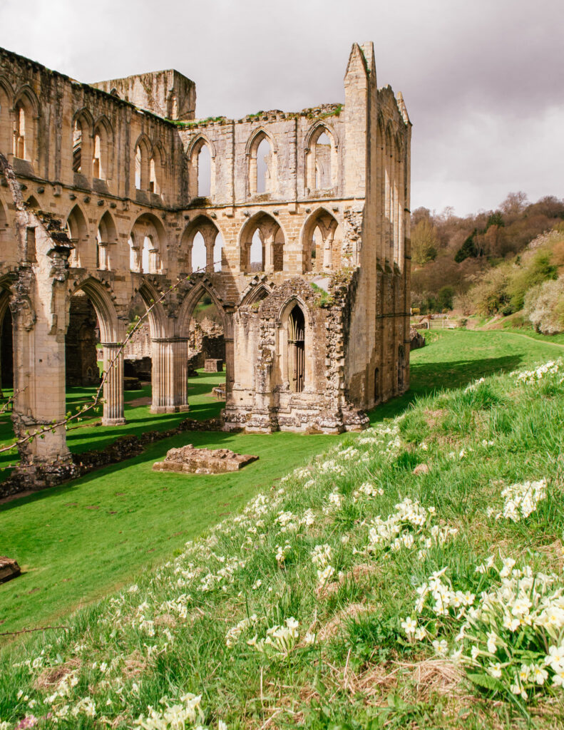 spring flowers on the banks of Rievaulx Abbey in Helmsley, Yorkshire
