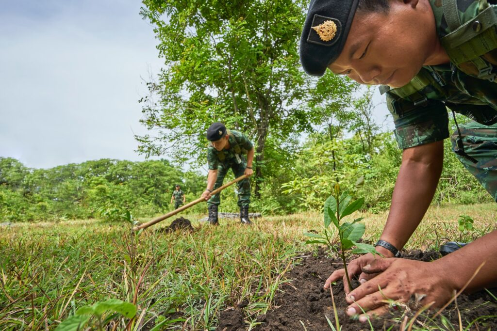 army planting trees in field